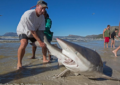 Moment fishermen risked their lives to drag a shark back into the sea