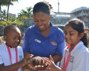 uSHAKA sea world looking for education volunteers